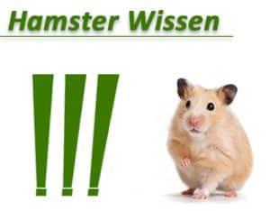 Hamster Wissen klein