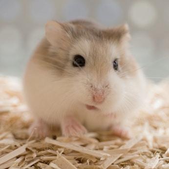Hamster Auslauf