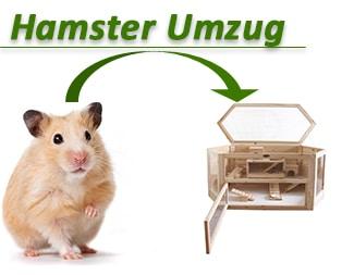 Hamster-Umzug
