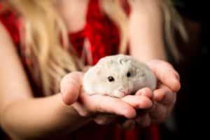 Hamsterhaltung - Hamster hoch heben